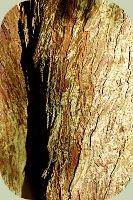 wstrn red cedar bark