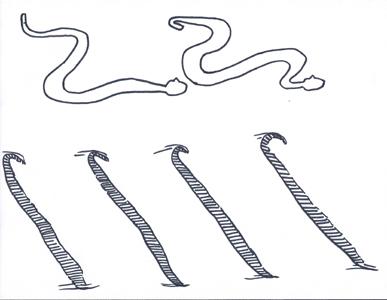 snake tracks side winding