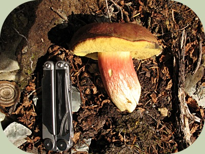 Edible Fall Mushrooms In Indiana http://www.wildernesscollege.com/edible-wild-mushrooms.html