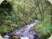 Alderleaf campus creek