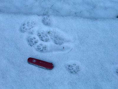 house cat sit tracks