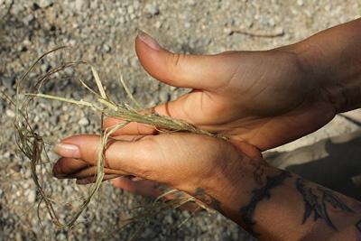 buffing nettle fibers