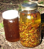 cottonwood oil infusing