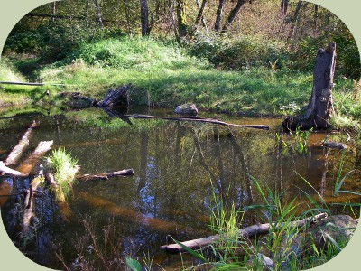 Freshwater ecosystems ponds for permaculture for Freshwater pond fish