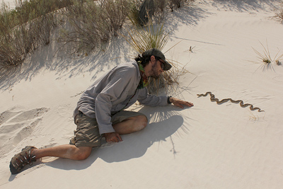 Snake encounter at White Sands