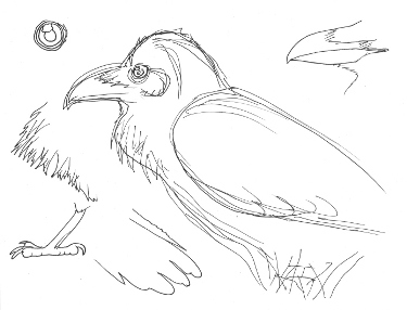 how to draw birds sketching