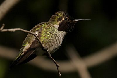 Pequeño colibrí lindo rescatado de la tela de araña - noticias de WSFA.com Montgomery Alabama.