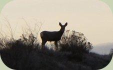 deer photo 2