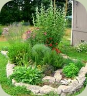 medicinal herb gardening