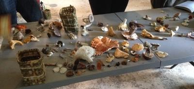 wild mushroom identification