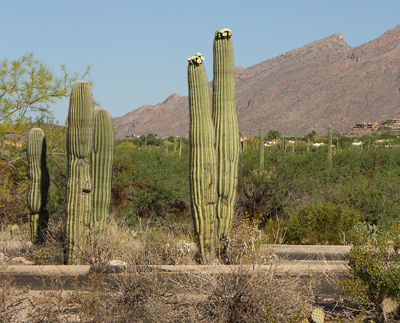 Plants In The Desert Living Survival Aids