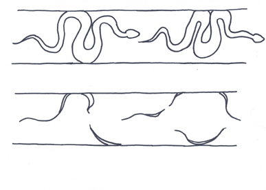 snake tracks concertina locomotion