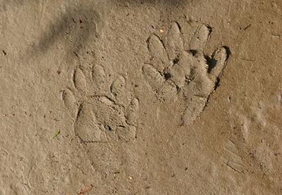 Learning animal tracking basics