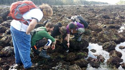 students investigate tidepool life