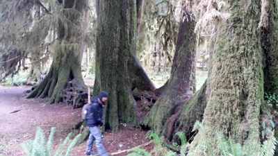 student exploring old-growth forest