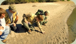 wildlife tracking course