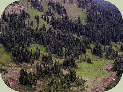 wolverine habitat