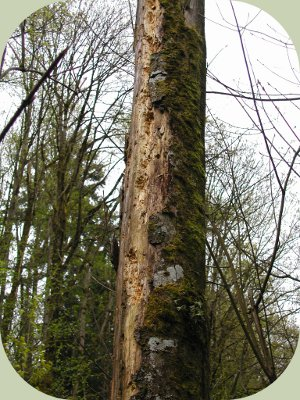 woodpecker habitat
