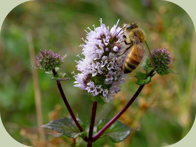Forest food web honeybee