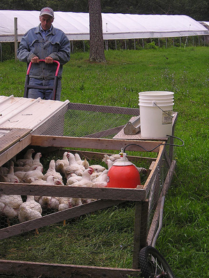 chicken tractor on wheels