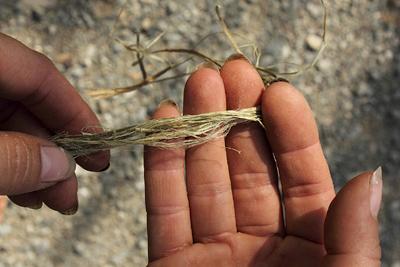 nettle fibers separating