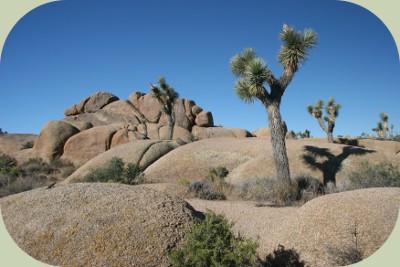 coyote habitat mojave desert