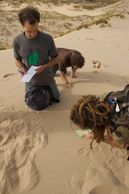 closely studying small tracks
