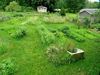 the garden at Alderleaf