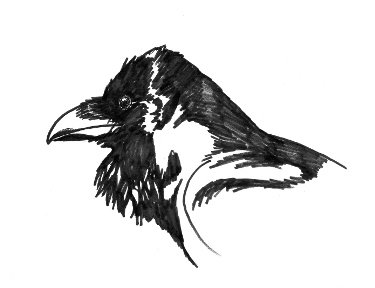 how to draw birds shadow and light