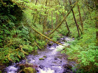 McCoy Creek at Alderleaf