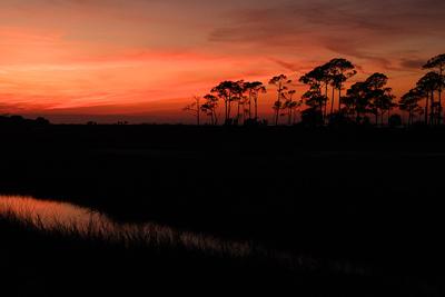 swamp ecosystem