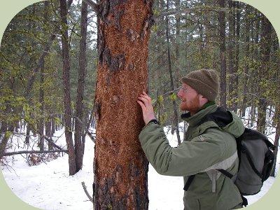 woodpecker habitat